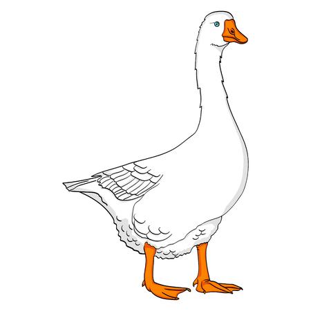 Objeto aislado sobre fondo blanco pato, ganso, pájaro en un vector de fondo de color azul