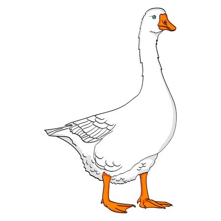Isolated object on white background duck, goose, bird on a color blue background vector