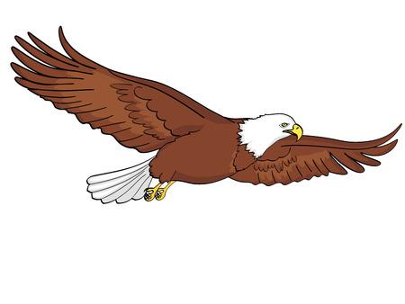 Background bird eagle, falcon. Vector illustration. Isolated object on white background.