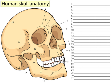 Medical Education Chart of Biology for Human Skull Diagram. Vector illustration. Front aspect table on white background for basic medical education Ilustração