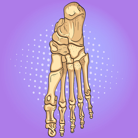 Pop art background. Bones of the foot with main parts labeled. From above, lateral and medial views. Vector Illustration