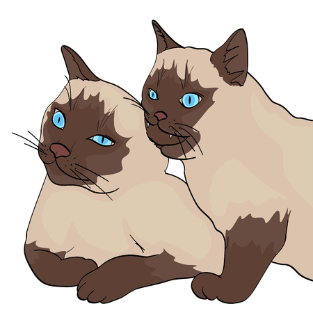 isolated object on white background, summer color. Two cats, the animal bites the other. Siberian breed, color Neva Masquerade or Siamese. Comic style, vector illustration.