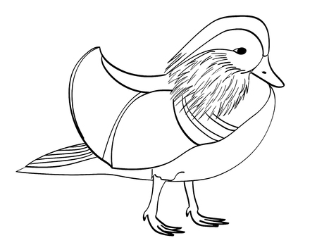 Book coloring for children. Raster bird, Mandarin duck, goose.