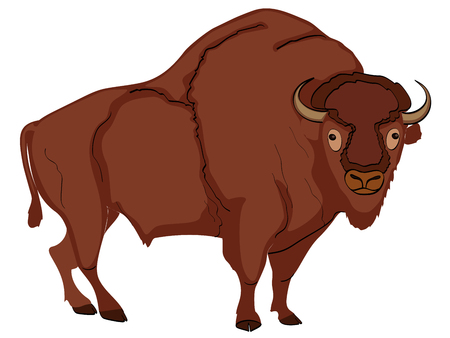 Animal artiodactyl, bison, cow. Comic book style imitation. Object on white background.