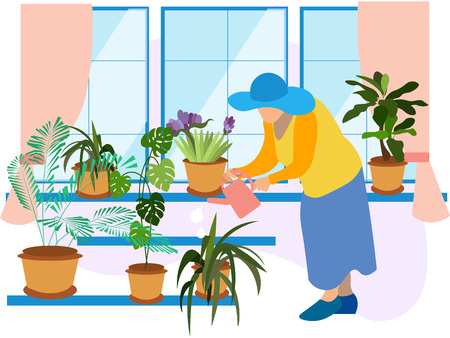 Grandmother, a pensioner watering indoor flowers. Winter garden, potted flowers. In minimalist style Cartoon flat Vector Ilustração