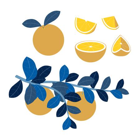 Fruit set, orange slices. Vitamins, proper nutrition. In minimalist style Cartoon flat Vector Illustration