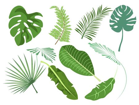 Leaves set of various plants vector illustration flat