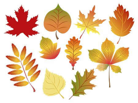 Set of autumn leaves on a white background, isolated. In minimalist style. Cartoon flat vector Illustration