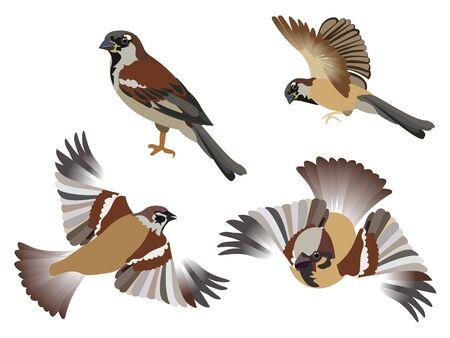Set, petits oiseaux moineaux, 4 pièces. Isolé sur fond blanc. Dans un style minimaliste. Plat de dessin animé