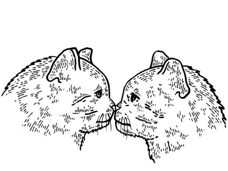 Kiss of two cats sketch engraving vector illustration. T-shirt apparel print design. Scratch board style imitation.