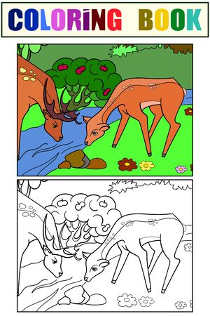 Couple, deer family at a watering hole, in a forest. Set coloring book and color picture. Vector Illustration