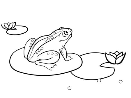 Children coloring toad, a frog is sitting on a water lily. Black and white. Cartoon raster