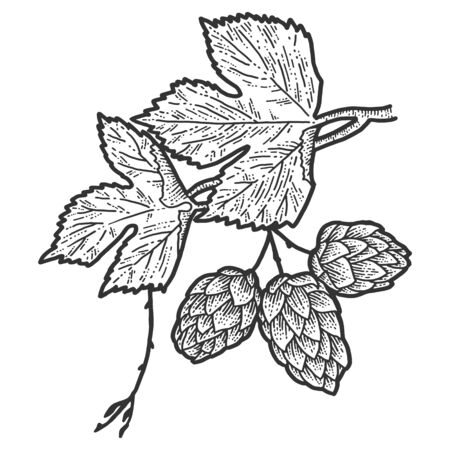 Sprig of blooming hops and leaves. Scratch board imitation. Black and white hand drawn image. Stock Illustratie