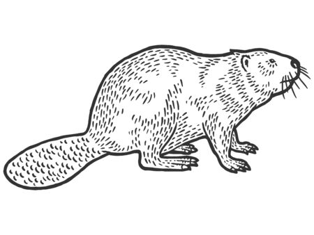 Beaver rodent mammal. Scratch board imitation. Black and white hand drawn image. Engraving raster illustration Фото со стока