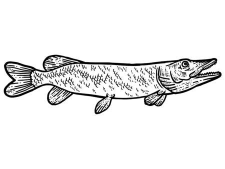 Big predatory fish pike. T-shirt apparel print design. Scratch board imitation. Black and white hand drawn image.
