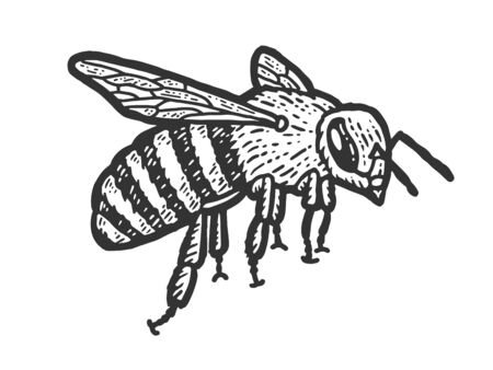 Insect sketch, a bee flies. Scratch board imitation. Black and white hand drawn image. Engraving vector illustration