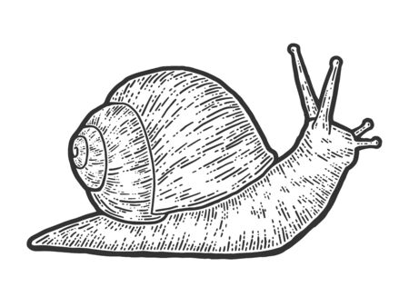 Snail gastropods, isolated animal. Sketch scratch board imitation. Vector Illustration