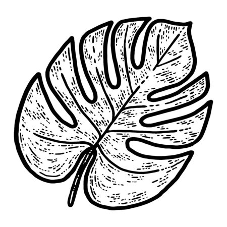Monstera leaf, isolated plant. Sketch scratch board imitation. Black and white. Engraving raster illustration.