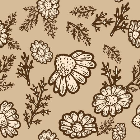 Seamless pattern. Plant blooming camomile isolated. Sketch scratch board imitation.