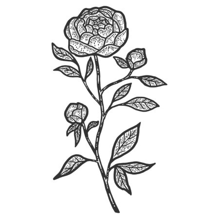 Peony flower. Sketch scratch board imitation. Black and white.