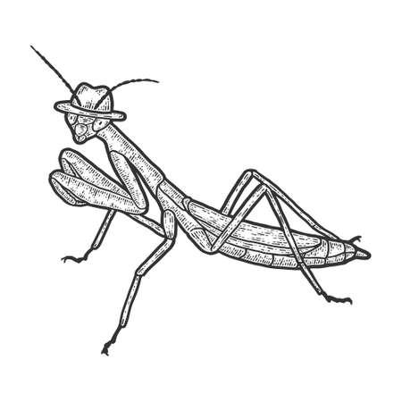 European mantis, intelligent insect in a hat. Sketch scratch board imitation. Vettoriali