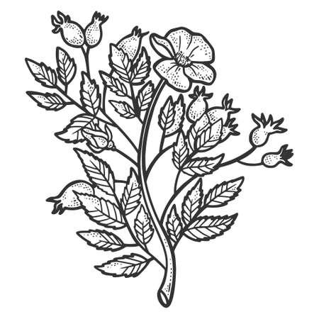 Rosehip bush. Sketch scratch board imitation. Black and white.