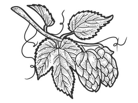 Hops plant. Sketch scratch board imitation. Black and white. 免版税图像
