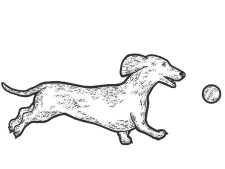 Dachshund dog plays with ball. Sketch scratch board imitation. Black and white.  イラスト・ベクター素材