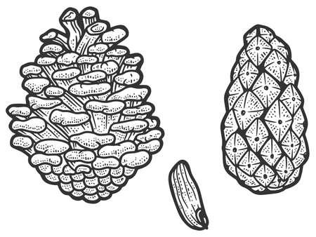 Set of fir conifer cone. Sketch scratch board imitation. Black and white.