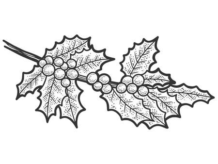Sprig of holly. Sketch scratch board imitation. Black and white. Engraving raster illustration.
