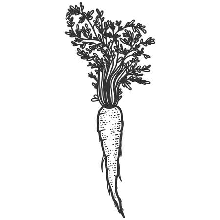Plant, carrots with herbs. Sketch scratch board imitation. Black and white. Engraving raster illustration.