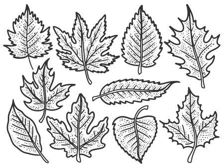Set of leaves, autumn trees. Sketch scratch board imitation. Black and white.