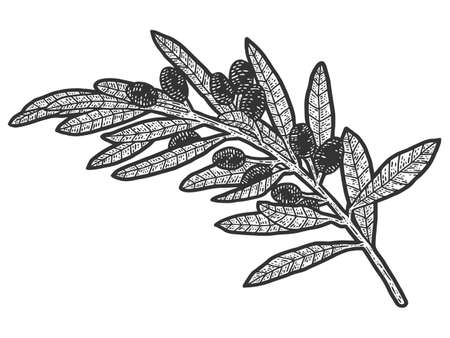 A sprig of wild olives. Sketch scratch board imitation. Black and white.