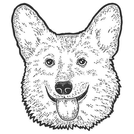 Dog head, corgi. Sketch scratch board imitation. Black and white.