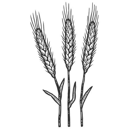 Three wheat spikelets. Sketch scratch board imitation color.