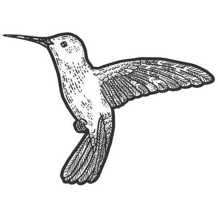 Bird in flight, hummingbird. Sketch scratch board imitation coloring