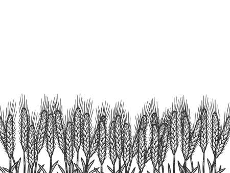 Wheat field, background. Sketch scratch board imitation color. Ilustracja
