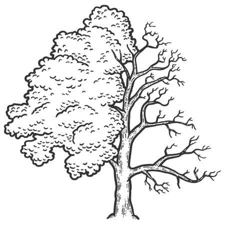 Fraxinus, tree is half bald. Engraving vector illustration. Sketch scratch board imitation.