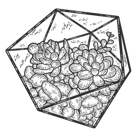 Succulent plant, glass florarium vase. Engraving vector illustration. Illusztráció