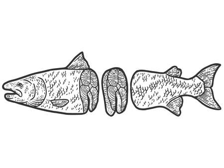 Showcase of the fish department. Atlantic salmon carcass split, steak. Engraving raster illustration.