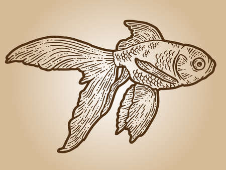 Goldfish. Engraving sketch scratch board imitation. Sepia hand drawn image. Illusztráció