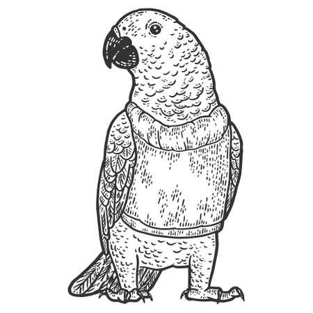 Poultry, parrot in a sweater. Engraving vector illustration. Illusztráció