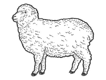 Merino farm animal. Engraving vector illustration. Sketch scratch board imitation.
