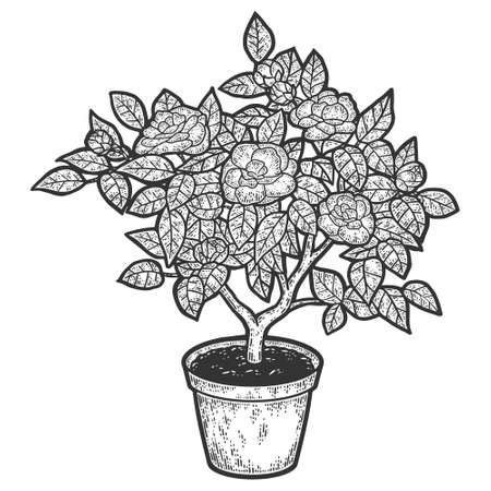 Blooming tree in a pot. Engraving vector illustration. Sketch  イラスト・ベクター素材