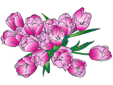 Coloring book flowers, pink tulips bloomed. Engraving vector illustration.