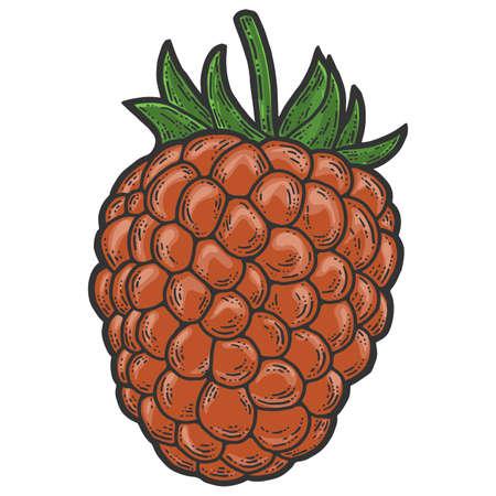 Raspberry, isolated berry. Scratch board imitation. Engraving raster illustration 版權商用圖片