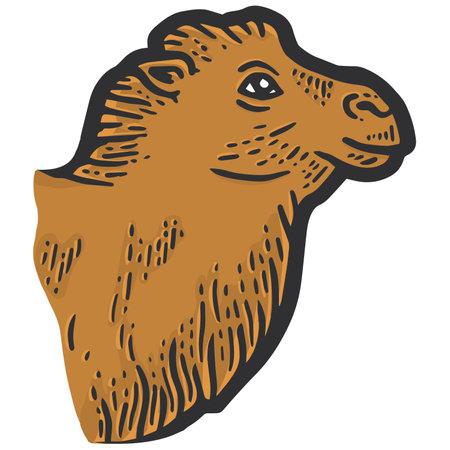 Animal fluffy, the head of a camel. Sketch scratch board color. 版權商用圖片