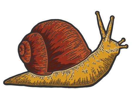 Snail red gastropods, isolated animal. Sketch scratch board imitation. 版權商用圖片