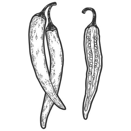 Chili pepper. Set is whole and cut, half. Sketch scratch board imitation. Banque d'images