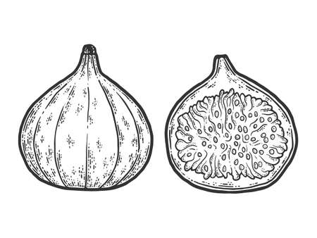 Fig fruits. Whole and half. Sketch scratch board imitation. Black and white.
